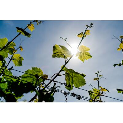 050 - DLR Neustadt - Stephan Presser Photography_lr_4.jpg